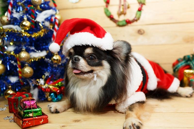 holidaypets