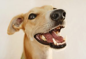 dental care tips for your pet
