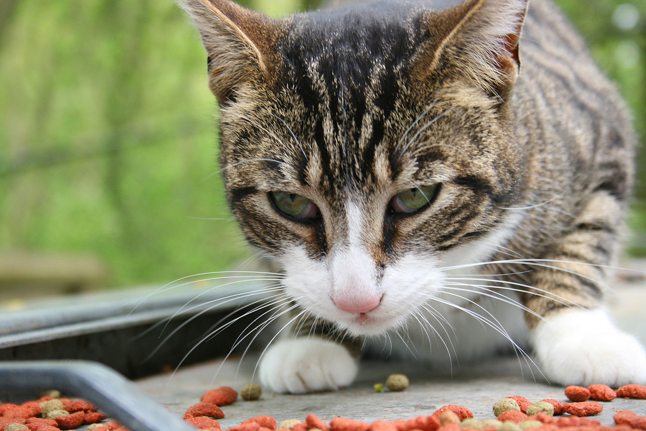 better nutritional foods for our dogs and cats